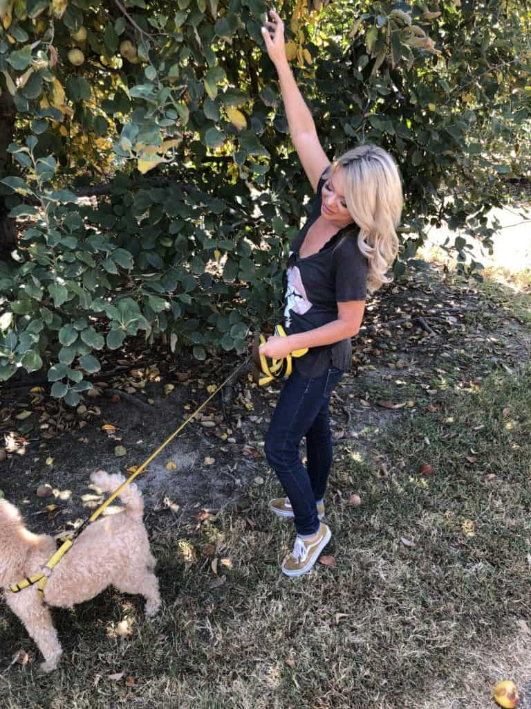 me picking apples with my goldendoodle